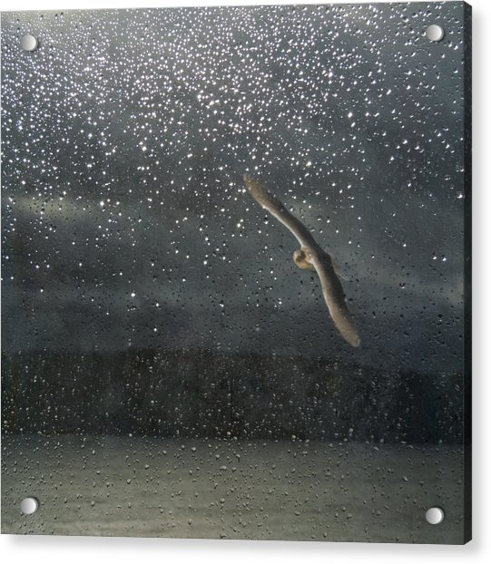 Acrylic Print featuring the photograph Glistening Tears by Sally Banfill