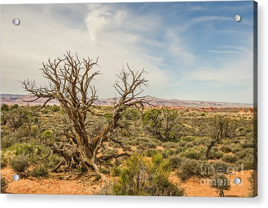 Gnarled Juniper Tree In Arches Acrylic Print