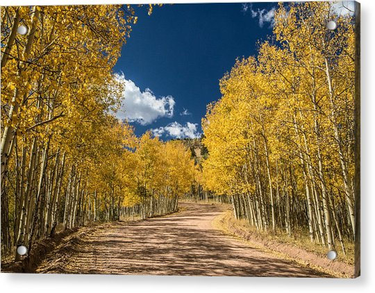 Gold Camp Road Acrylic Print