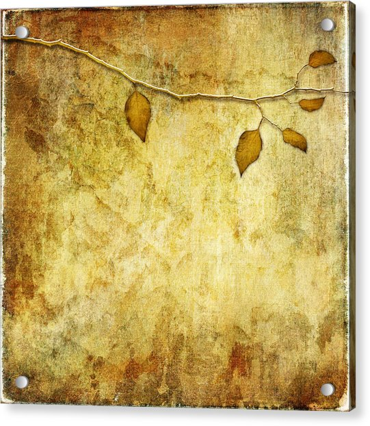 Golden Branch Of Hope  Acrylic Print