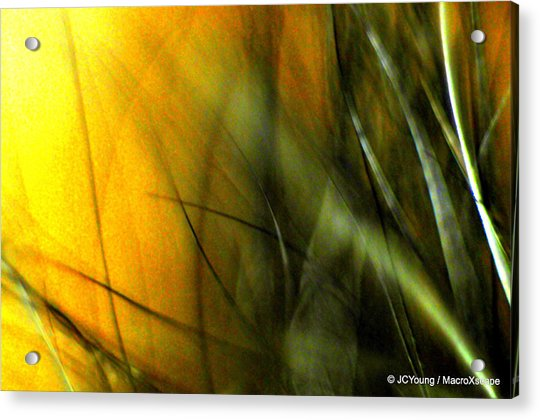 Golden Green Field Acrylic Print by JCYoung MacroXscape