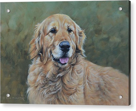 Acrylic Print featuring the painting Golden Retriever Portrait by Alan M Hunt