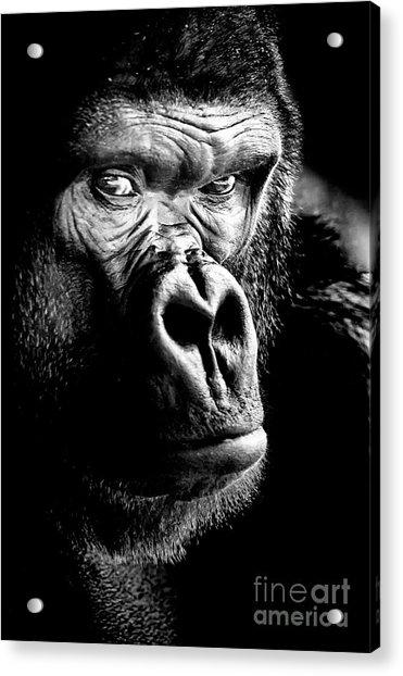 Gorilla Canvas Print, Photographic Print, Art Print, Framed Print, Greeting Card, Iphone Case, Acrylic Print