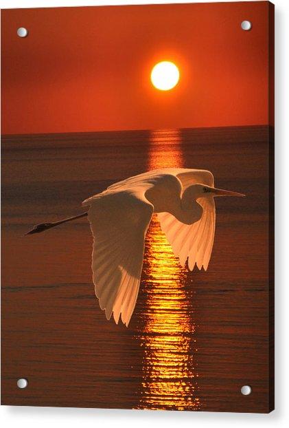 Great Egret At Sunset Acrylic Print