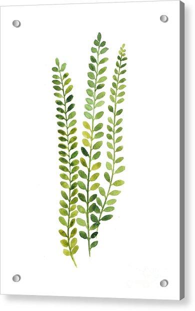 Green Fern Watercolor Minimalist Painting Acrylic Print