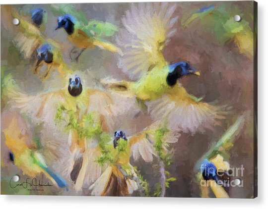 Green Jay Collage Acrylic Print