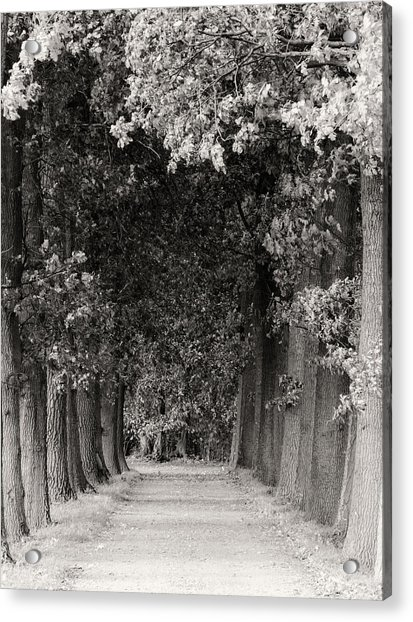 Greeted By Trees Acrylic Print