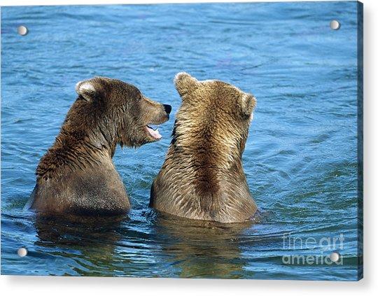 Grizzly Bear Talk Acrylic Print