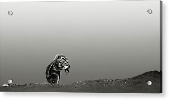 Ground Squirrel Acrylic Print