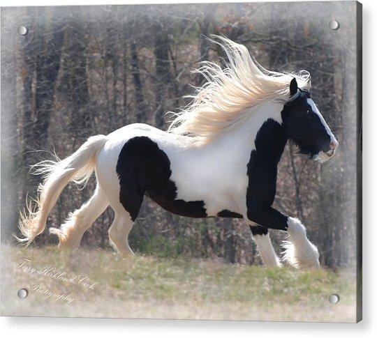 Gypsy Stallion Esperanzo Acrylic Print