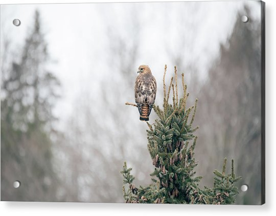 Hal Hanging Out Acrylic Print