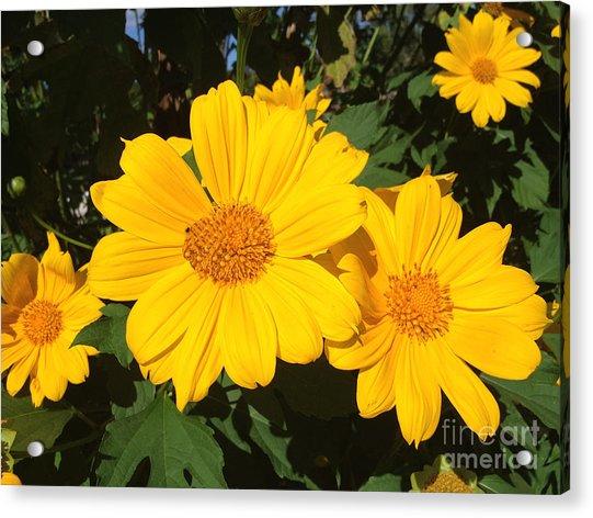 Happy Yellow Acrylic Print