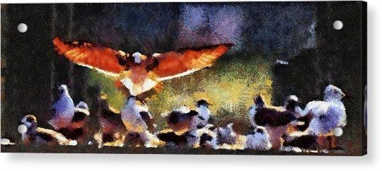 Harris Creek Gulls Acrylic Print