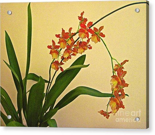 Hawaiian Orchid Spray Acrylic Print