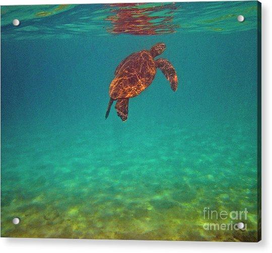 Hawaiian Sea Turtle - Floating Acrylic Print