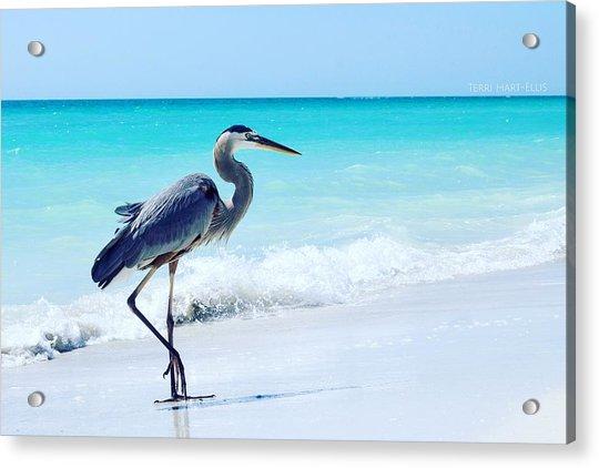 Heron Acrylic Print