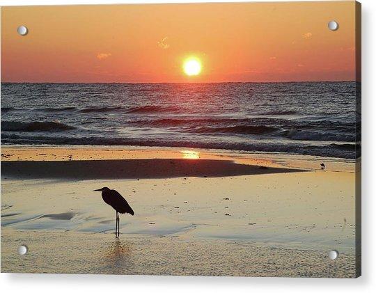 Heron Watching Sunrise Acrylic Print
