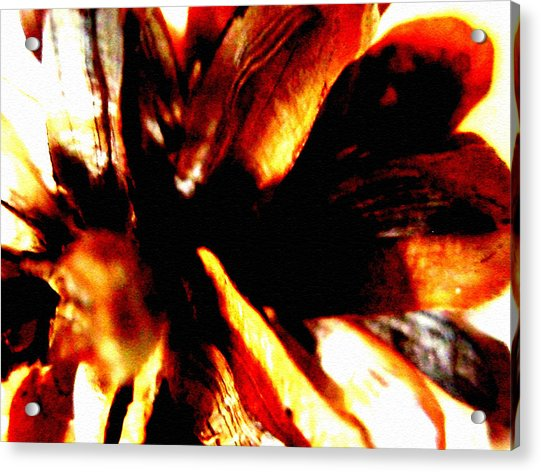 Hidden Image In Abstract Pinecone Acrylic Print