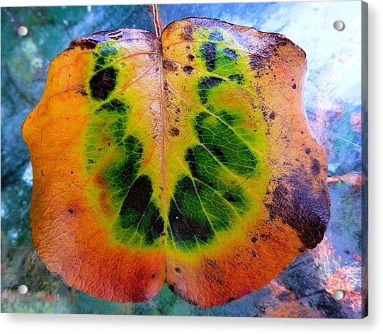 Hippie Leaf Acrylic Print