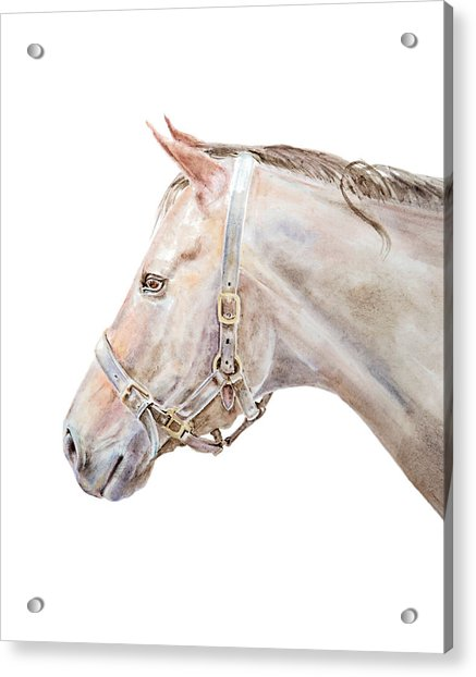 Horse Portrait I Acrylic Print