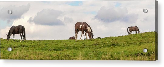 Horses And Clouds Acrylic Print