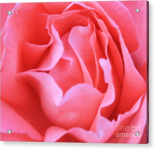 Hot Pink Petals Acrylic Print