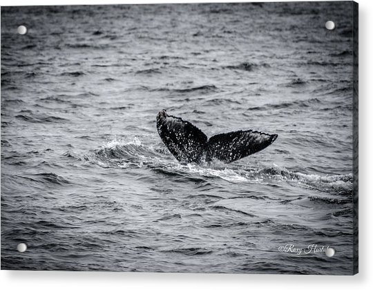 Humpback Whale Tail Acrylic Print