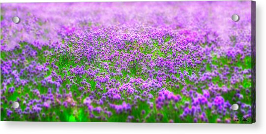 I Dream Acrylic Print