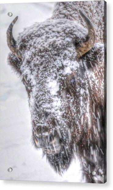 Ice Faced Acrylic Print