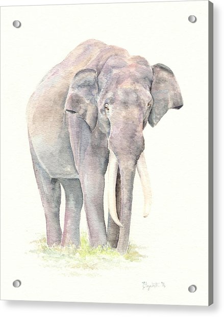 In Charge Acrylic Print