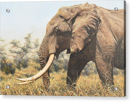 Acrylic Print featuring the painting In The Footsteps Of Elders by Alan M Hunt