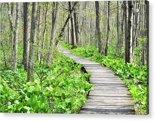 Indiana Dunes Great Green Marsh Boardwalk Acrylic Print