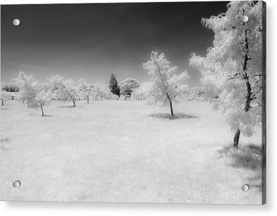 Infrared Peach Orchard Acrylic Print