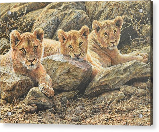 Acrylic Print featuring the painting Interrupted Cat Nap by Alan M Hunt