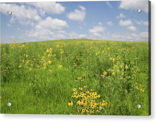 Iowa Summer Flowers I Acrylic Print
