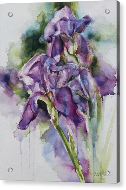 Iris Song Acrylic Print