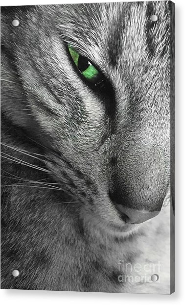 I've Got My Eye On You.  Acrylic Print