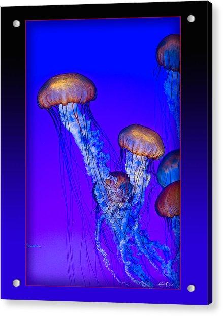 Jellyfish Floating Up Acrylic Print
