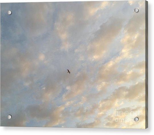 Jonathan Livingston Seagull Acrylic Print