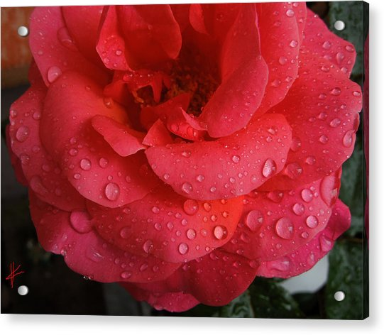 Acrylic Print featuring the photograph June  Rose  by Colette V Hera  Guggenheim