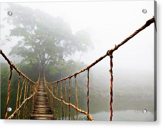 Jungle Journey Acrylic Print