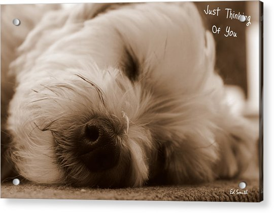 Just Thinking Of You Acrylic Print