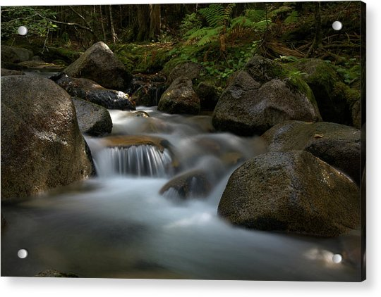 Katahdin Stream In The Shade Acrylic Print