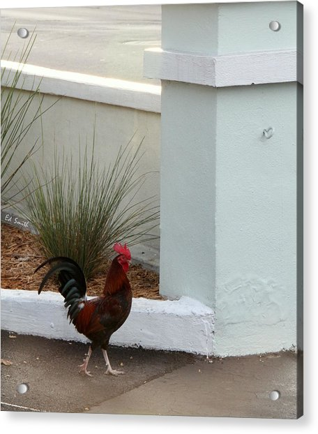 Key West Street Walker Acrylic Print