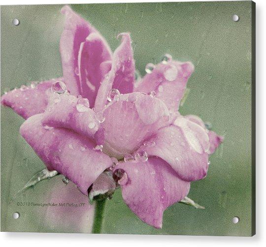 Kissed By The Rain Acrylic Print