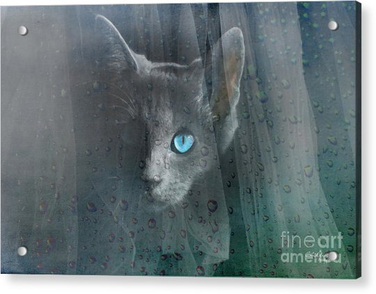 Kitty At The Window Acrylic Print