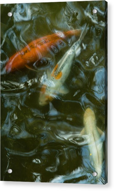 Acrylic Print featuring the photograph Koi IIi by Break The Silhouette