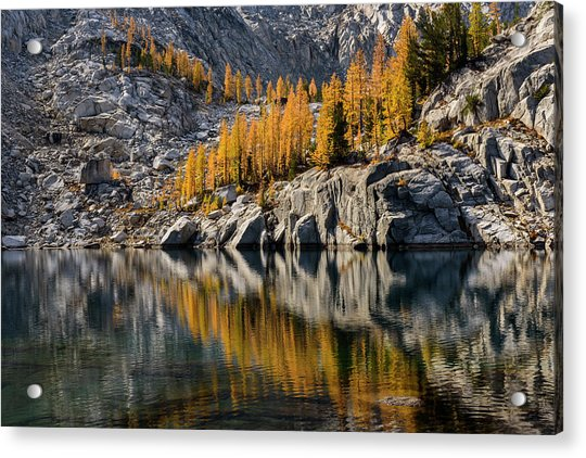 Larch Reflection In Enchantments Acrylic Print