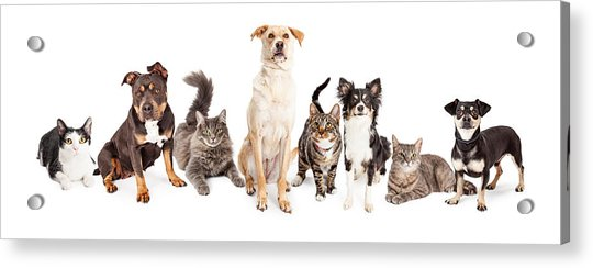 Large Group Of Cats And Dogs Together Acrylic Print