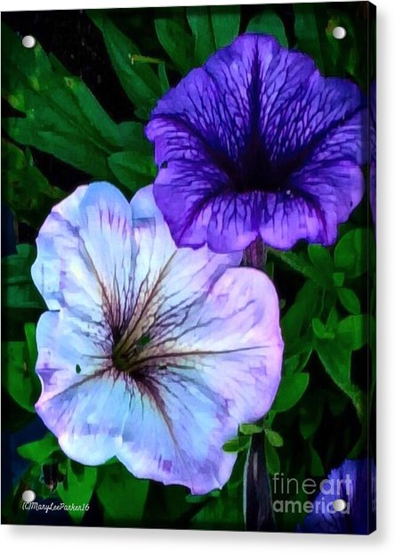Last Of The Petunias   Acrylic Print